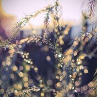 Бриллианты из дождя . :: Алла Мещерякова