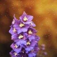 Лето радует своими красками... :: Мария Худякова