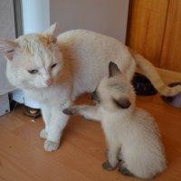 Коты :: Екатерина Малова