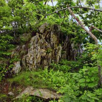Скала в лесу :: Boris Khershberg