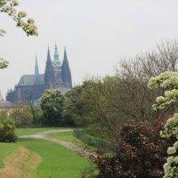 Собор Св. Вита в Праге :: Елена Маршавина