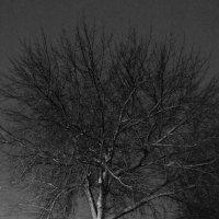 Зимнее одиночество :: Vitaly Tunnikov
