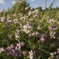 полевые цветы :: Vitaliy Kononov