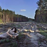 Последнее дыхание леса :: Melhian Carnellevare