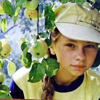 Яблочки :: Юрий Владимирович 34