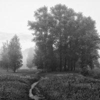 Туманное утро :: Андрей Нестеренко