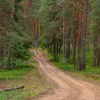 Дорога в лес :: Angelika Faustova