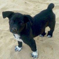 Пляжный пес. :: Чария Зоя