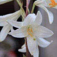 Цветы :: Андрей Тер-Саркисов