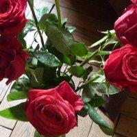Розы дома 02 :: Татьяна Юрасова