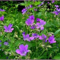 Пора цветения. :: Любовь Чунарёва