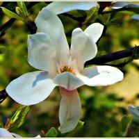 Цветок. :: Валерия Комова