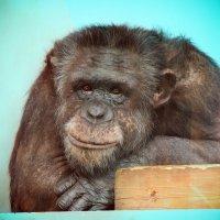 В Екатеринбургском зоопарке :: Олеся (Лесика) Касьянова