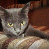 Соседская кошка :: Zinaida Belaniuk