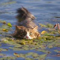 Водяной кот :: Леонид