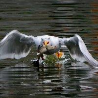 удачная рыбалка... :: Ольга Дмитриева