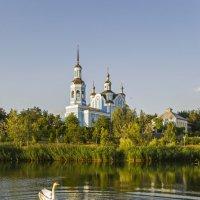 Белые лебеди на пруду :: Богдан Петренко