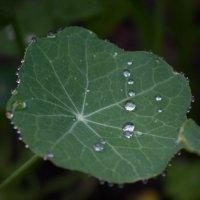 После дождя :: Елена Миронова
