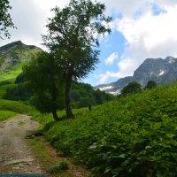 Лето в горах :: Геннадий Ячменев