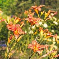 Цветы :: Павел Даль