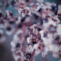 Flower :: Лина