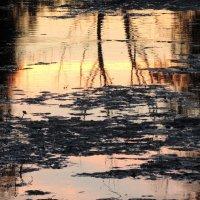 ночной водоём :: sv.kaschuk