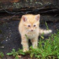 Котёнок. :: Антонина Гугаева