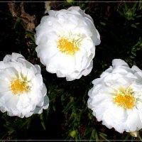 Цветы для невесты :: Татьяна Пальчикова