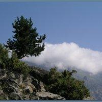 Облака плывут, облака... :: Лариса Каражаева