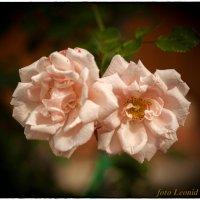 цветочки :: Леонид