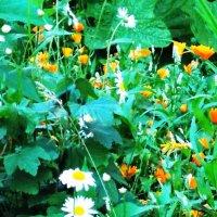 Цветы под окном :: Фотогруппа Весна.