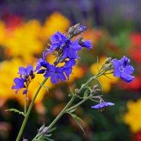 цветы, цветы... :: Юрий Приходько