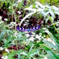 бабочка :: Сергей Якименко