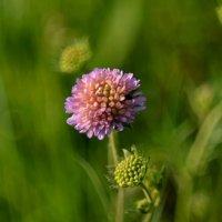 Из цикла ,Летние цветочки ..) :: Маry ...
