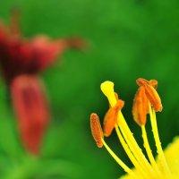Тычинки пестики :: Андрей Куприянов