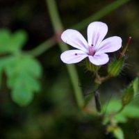 горный цветок :: Na2a6a N