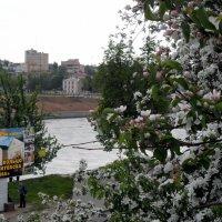 Весна в городе Витебске :: Анатолий ❉