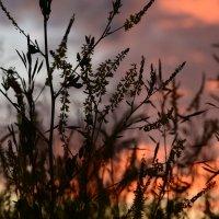 Очередная трава и замечательный вечер :: Екатерина Марфута