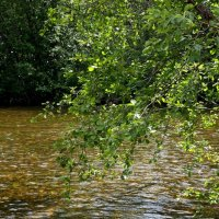Таежная река. :: Сергей Комков