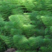 Зеленые волны :: Ната Волга
