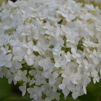 цветы :: Ольга Ершова