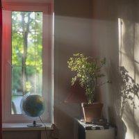 Лучи домашнего уюта :: Ирина Лисовенко
