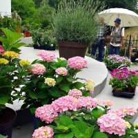 Цветочный магазин :: Natali
