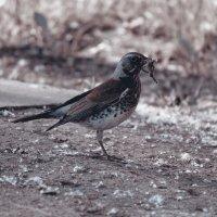 Хищная птица :: Владимир Марков