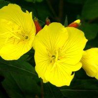 Цветы :: Валерий Талашов