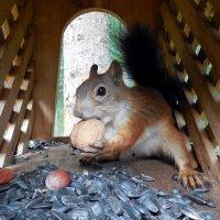 - Ух, какой орех вкусный!!! :: Наталья Пендюк Пендюк