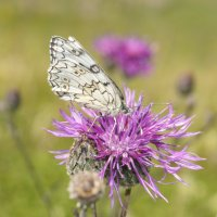 Бабочка :: Ирина Егорова