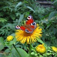 На цветке :: Андрей Снегерёв