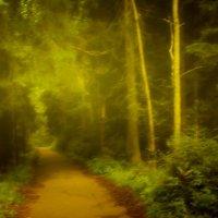 Туман в лесу :: Григорий Кучушев