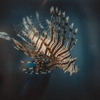 2 рыбки :: Стас Кокшаров